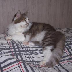 Fialotta (1)