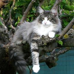 FILEAS sur son arbre perché !!